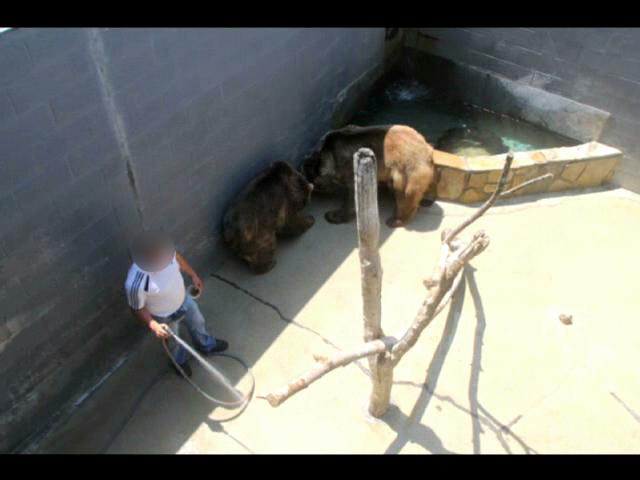 Bear Pits at CBZ