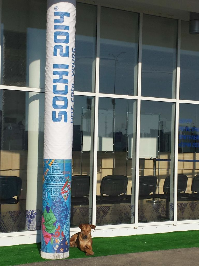 Stray Dog in Sochi Russia for Olympics