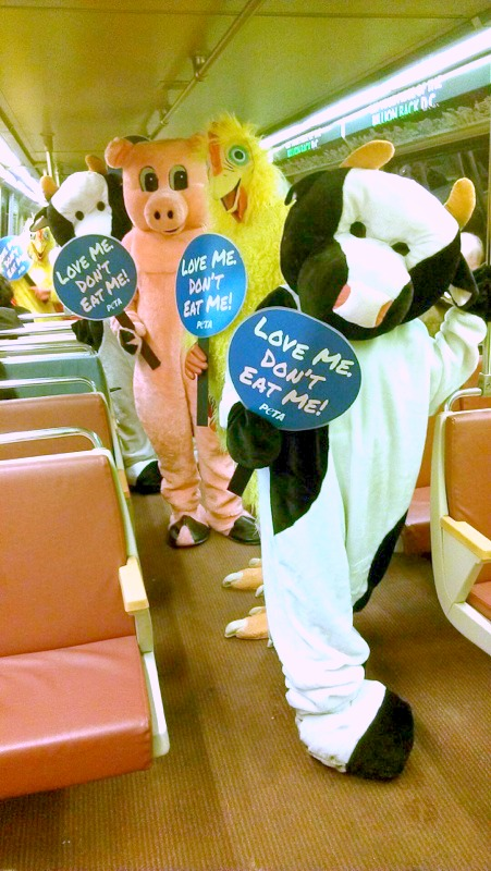 Vegan Cow, Pig, Chicken on DC subway