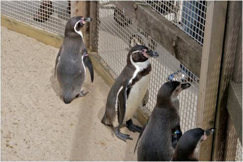 13 Times Zoos Were Bad for Animals | PETA