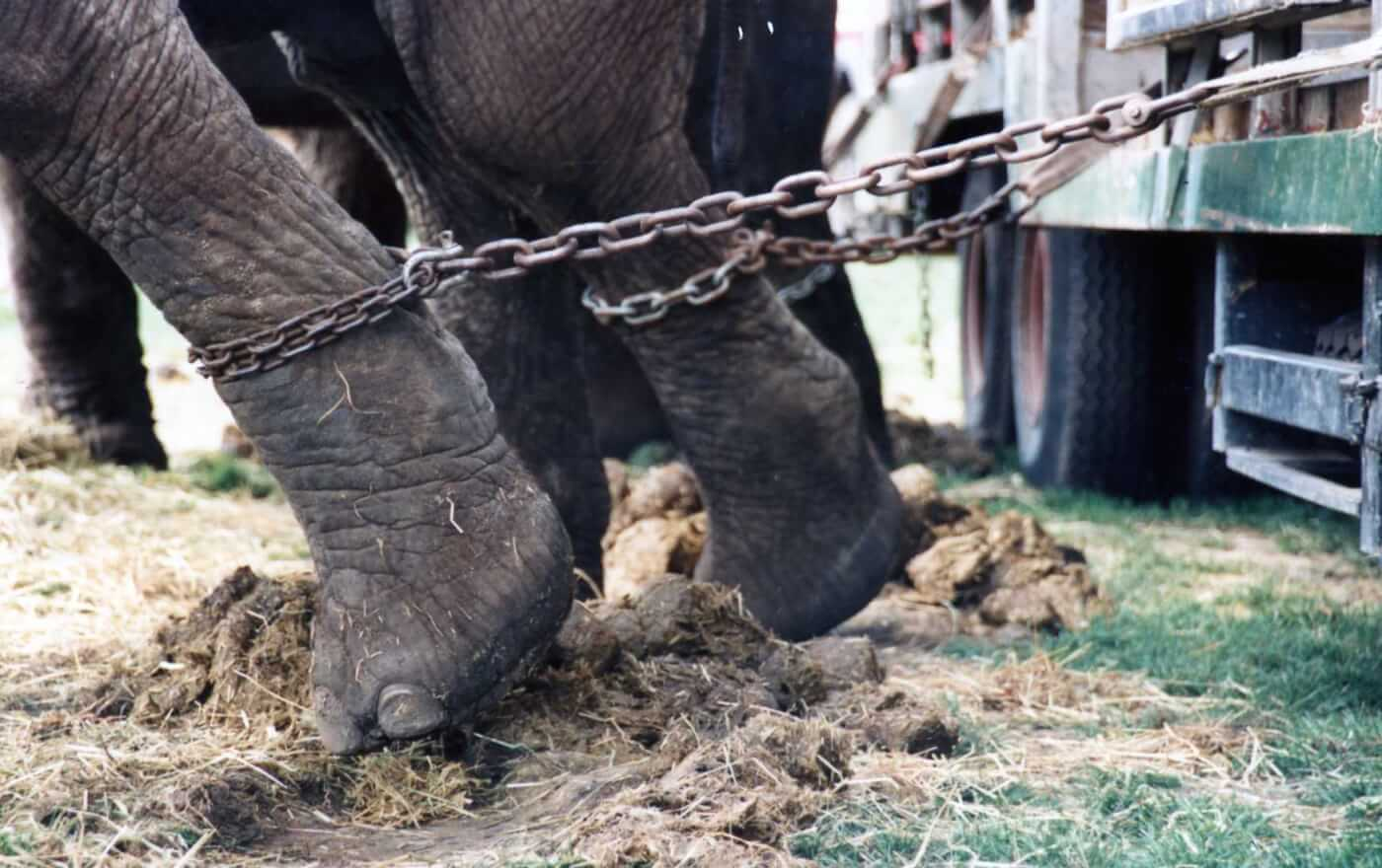 10 Reasons Not to Attend an Animal Circus | PETA