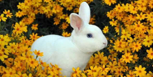 Bunny Rabbit in Flowers