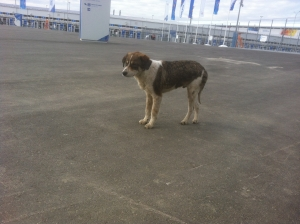 dog in Sochi