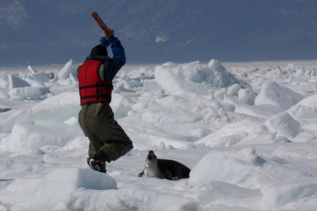 2009 Seal Hunt