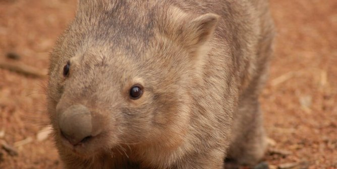9 Animals You Didn't Think Could Be This Cute
