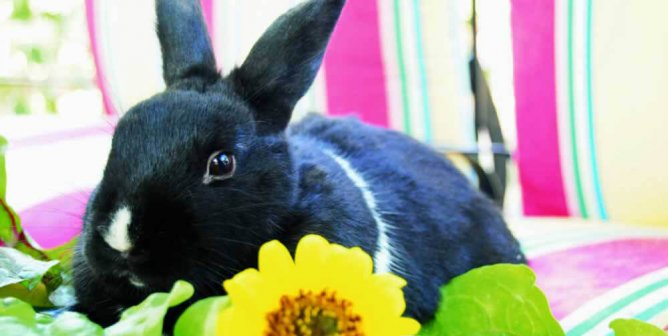 Top 3 Signs That Cruelty-Free Cosmetics Are Taking Over
