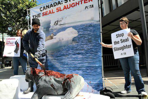 CanadianSealSlaughterImage