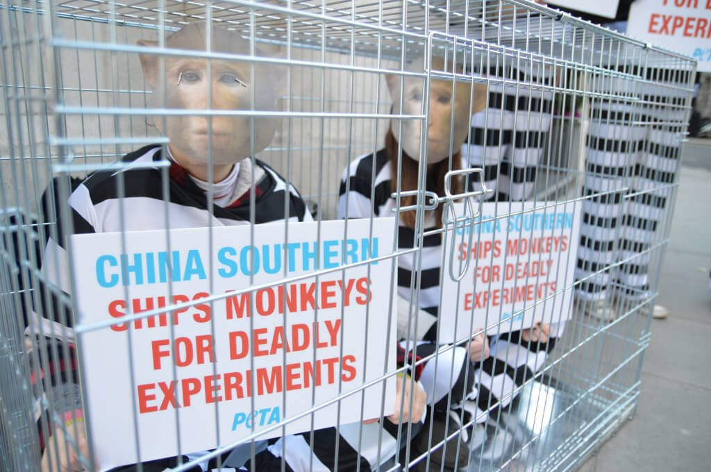 China Southern Demo Primates in Cages