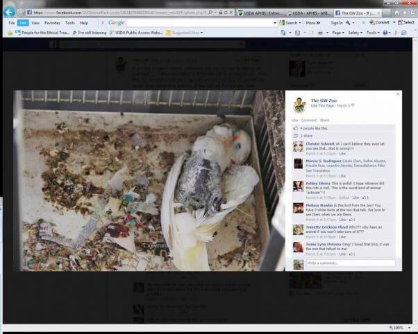 Dead Bird at GW Roadside Zoo