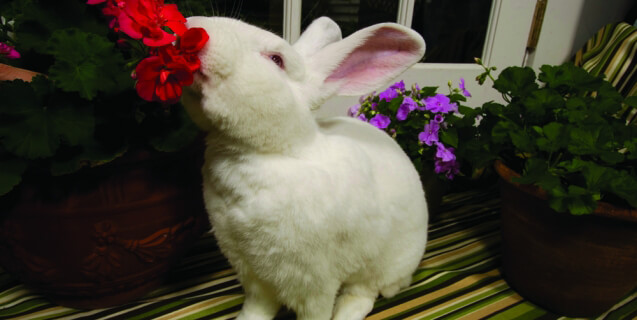 Lewie the Bunny with Flowers