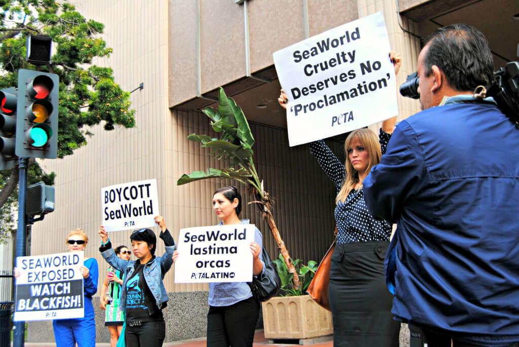 San Diego SeaWorld city hall protest