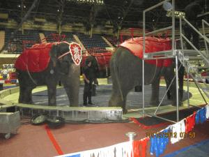 Shrine Circus elephant rides.