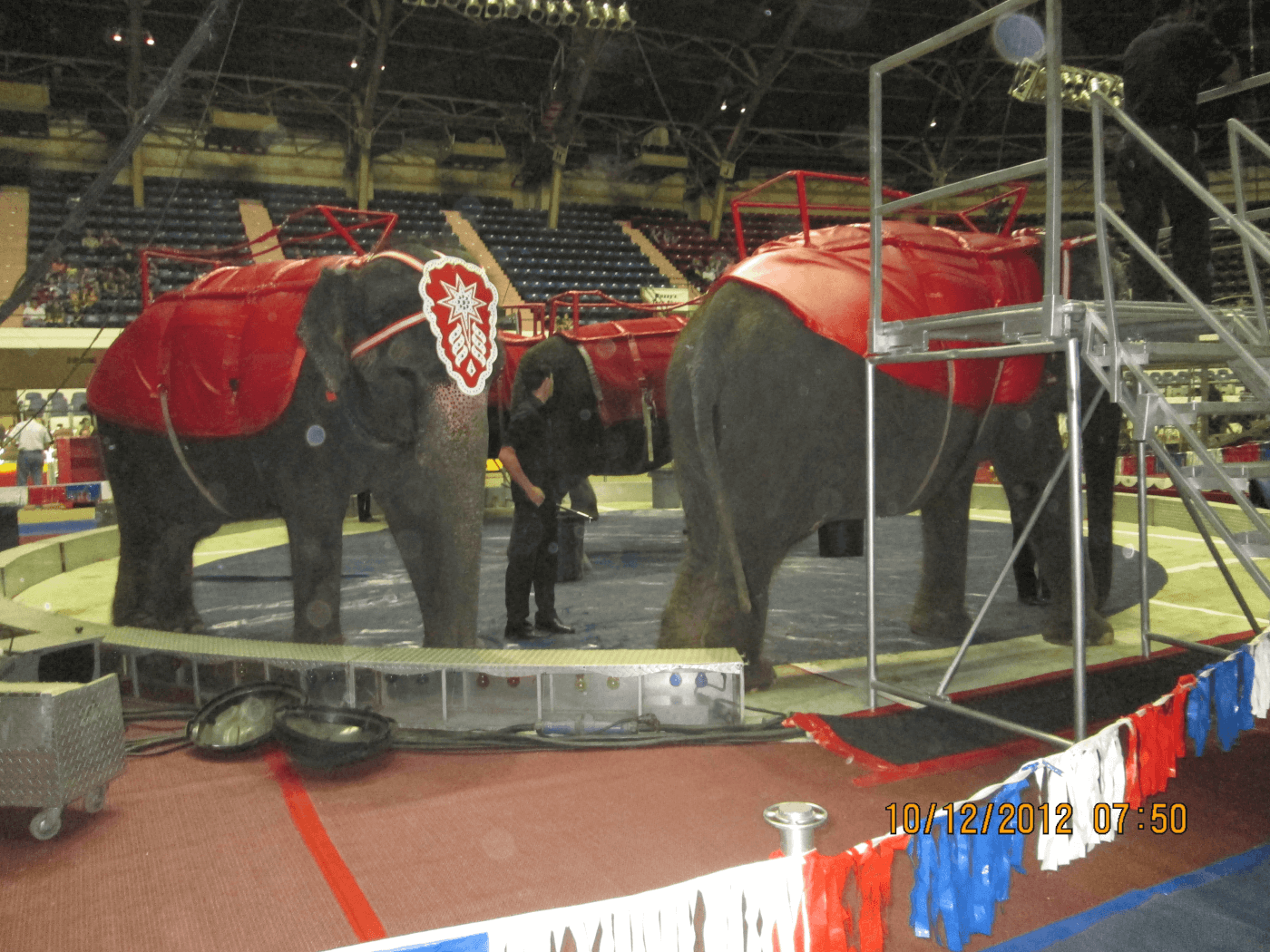 Update Circus Ignores Elephant In The Room And Boy