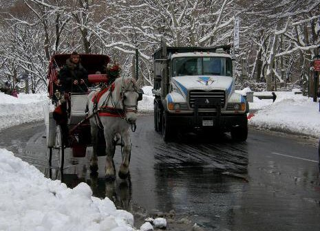 10 Things to Do in Central Park Other Than Hire Horse-Drawn Carriages