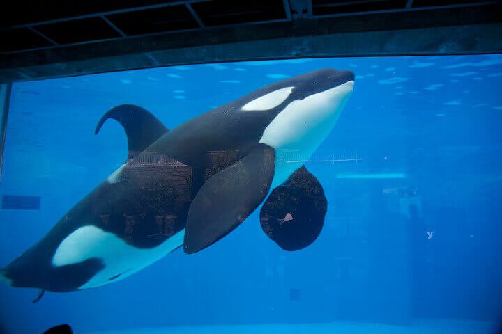 Get Your School's Senior Trip to SeaWorld Canceled | PETA
