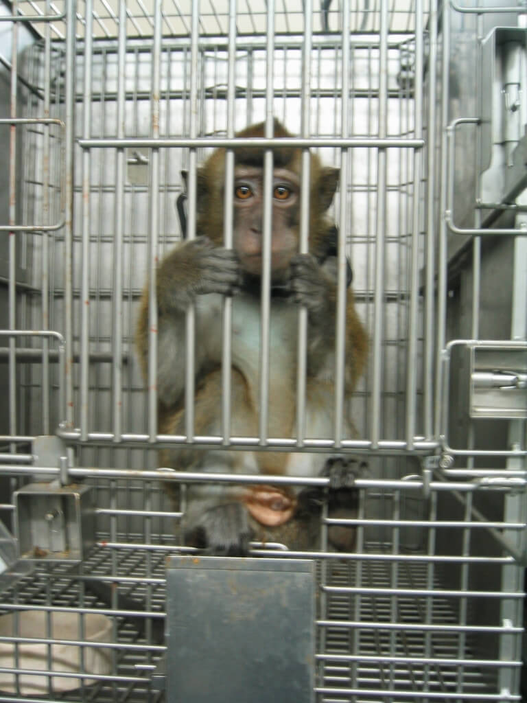 sad-looking monkey holding onto the front of his cage with all fours