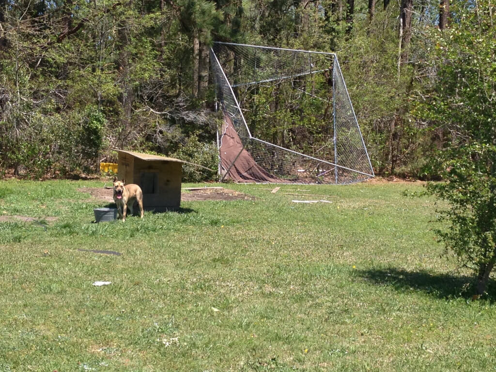 Blue the Dog after North Carolina Tornados (3)