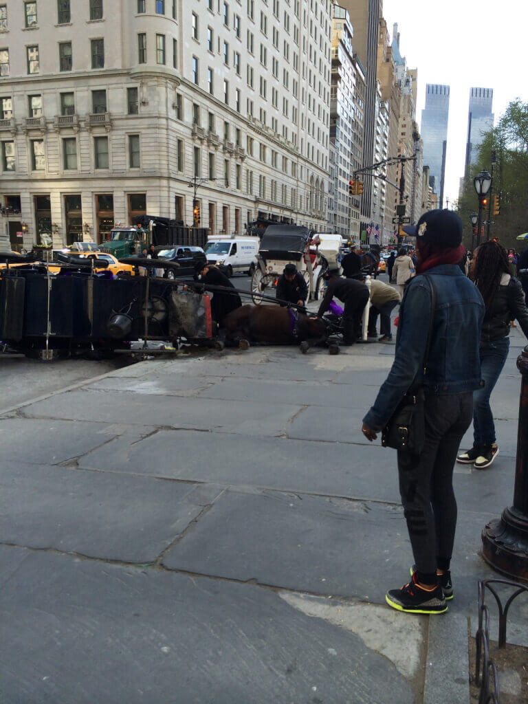 Downed Horse-Drawn Carriage in New York (4)