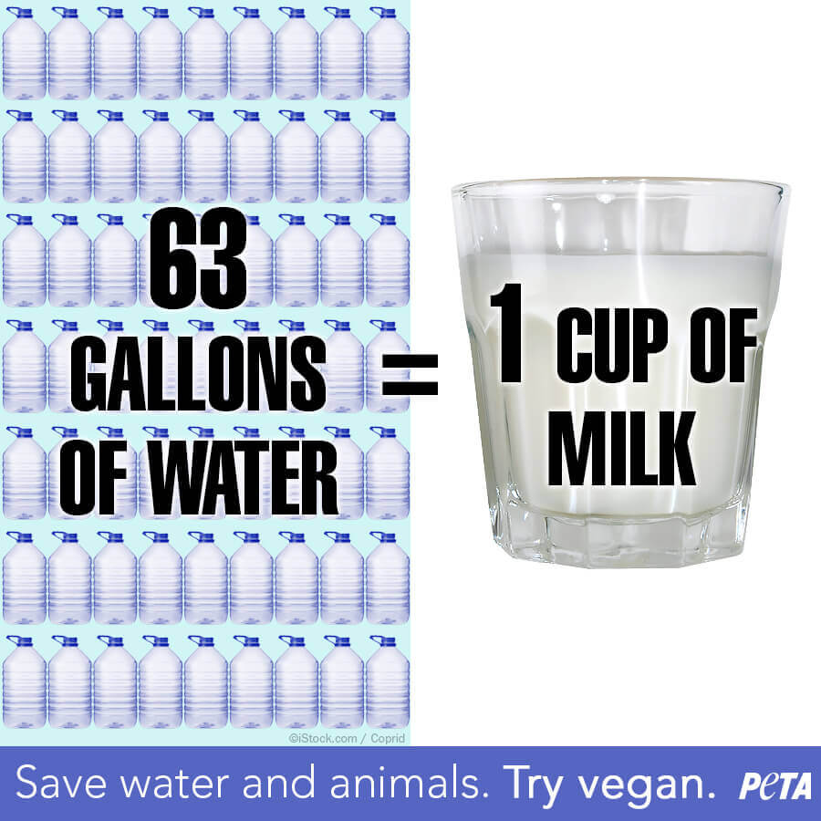 Milk Wastes Water