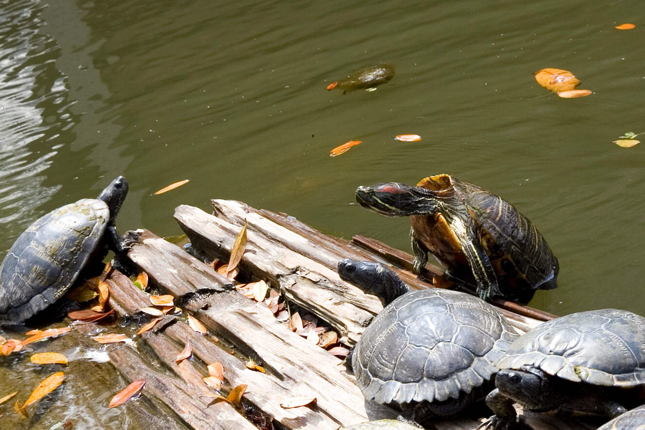 Yes, These Turtles Are Still Alive | PETA