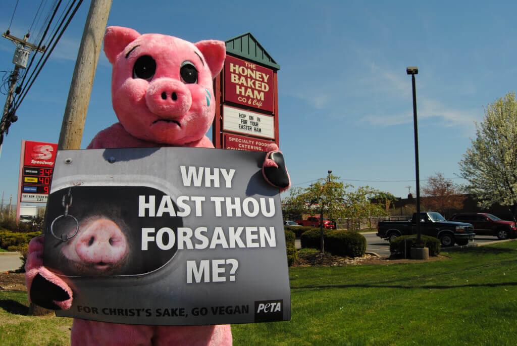 Honeybaked Ham Sad Pig Demo