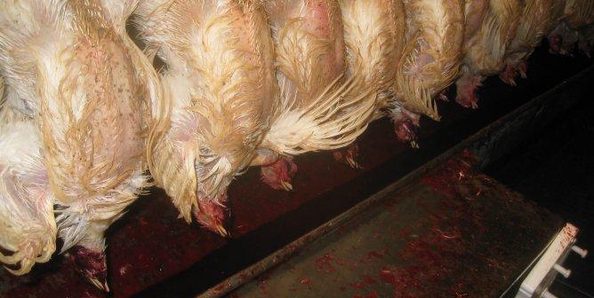 Teaching Prisoners to Butcher Animals—Dumbest Idea Ever?