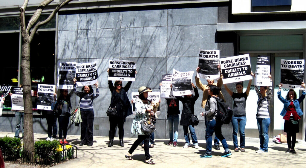 New York Horse-Drawn Carriage Protest in front of Liam Neeson's Apartment (1)