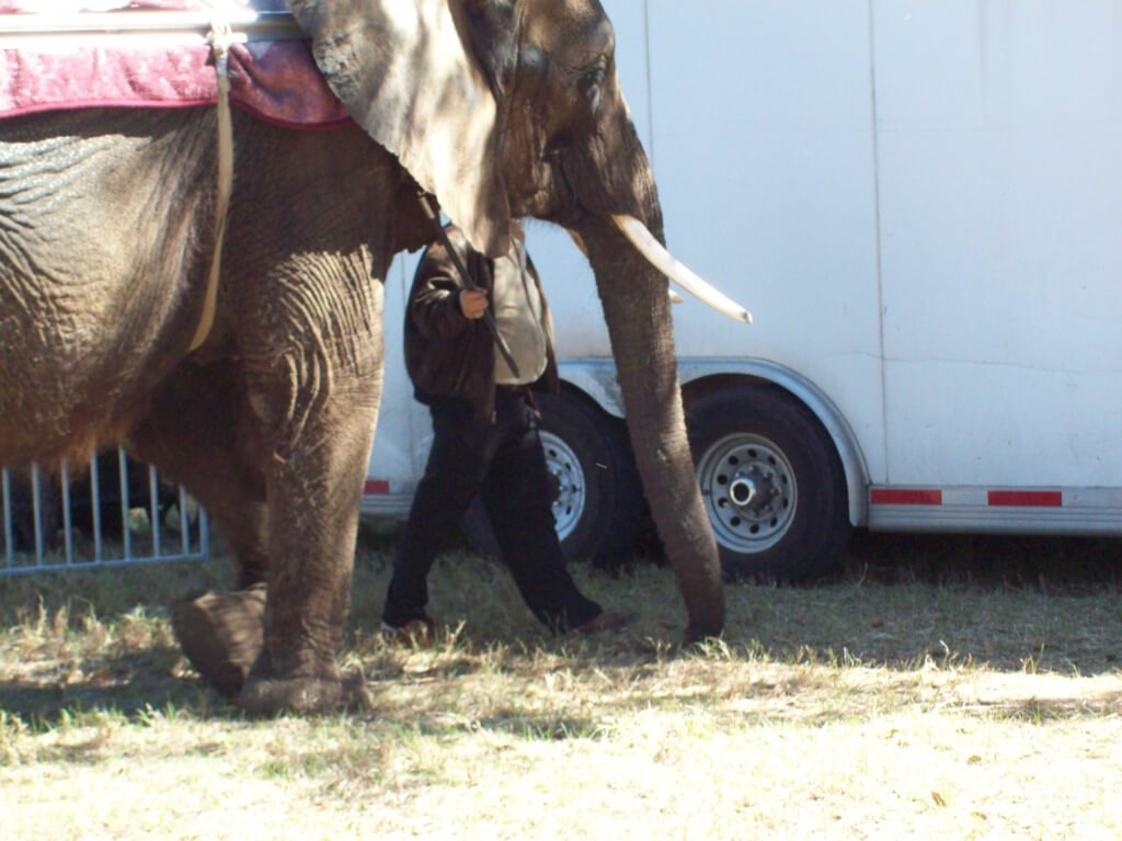 Nosey the Elephant (1)