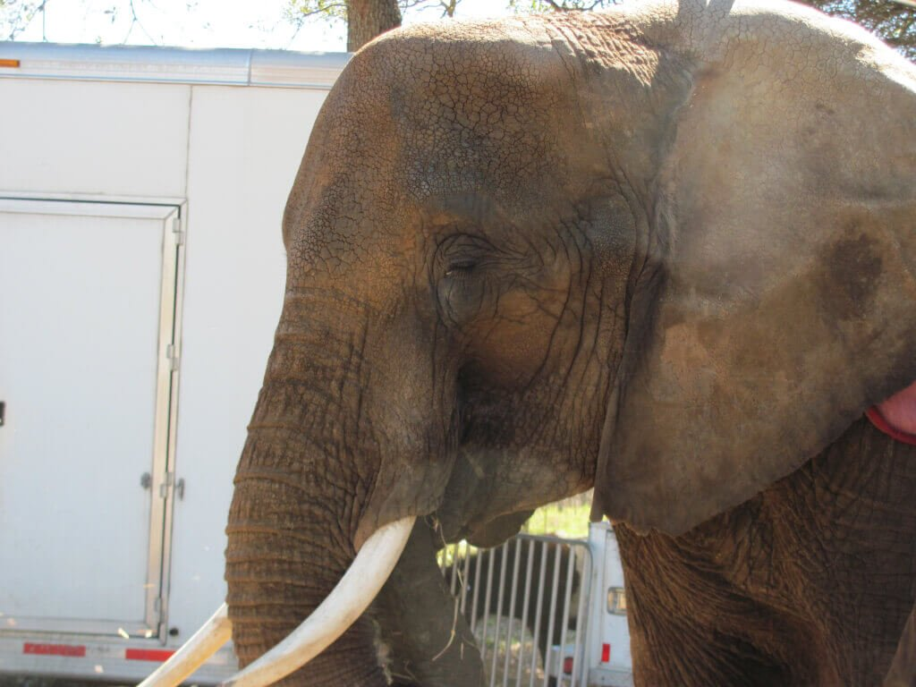 Nosey the Elephant (2)