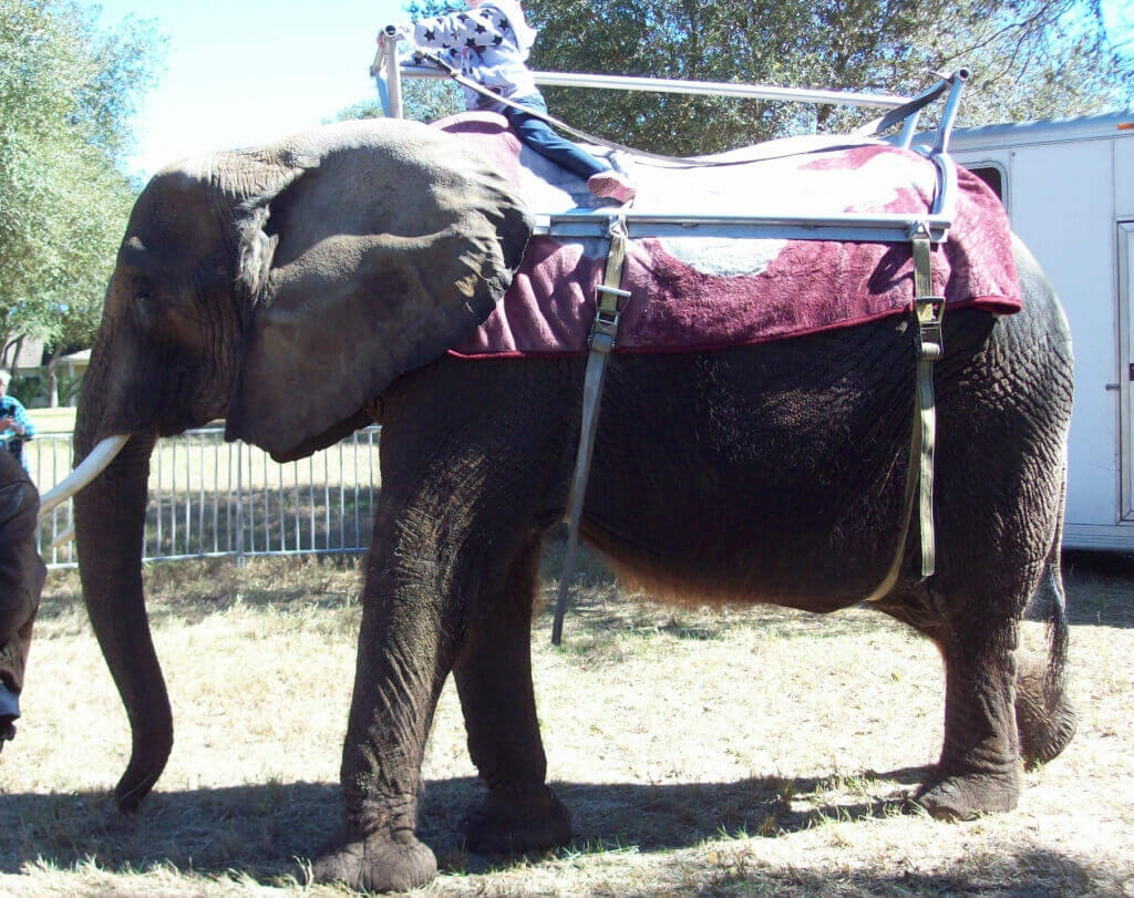 Nosey the Elephant (3)