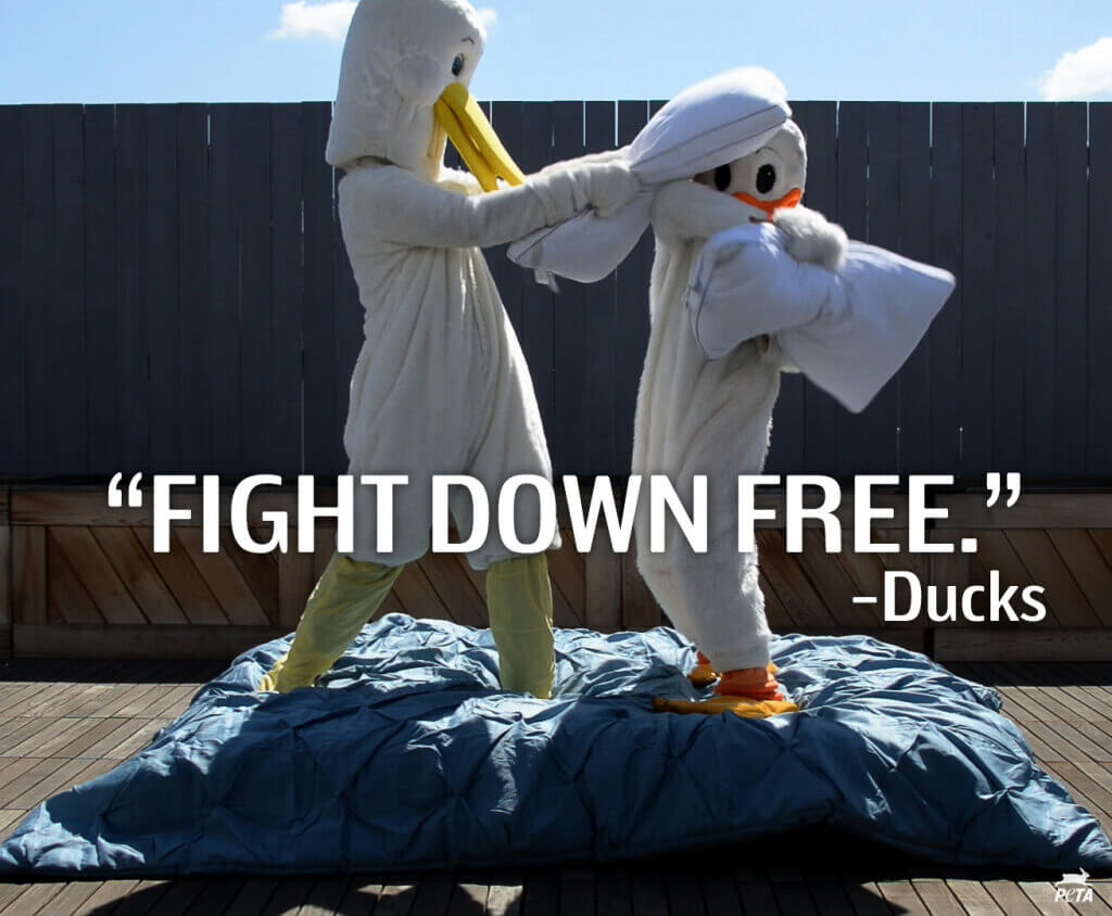 Pillow Fight Down Free