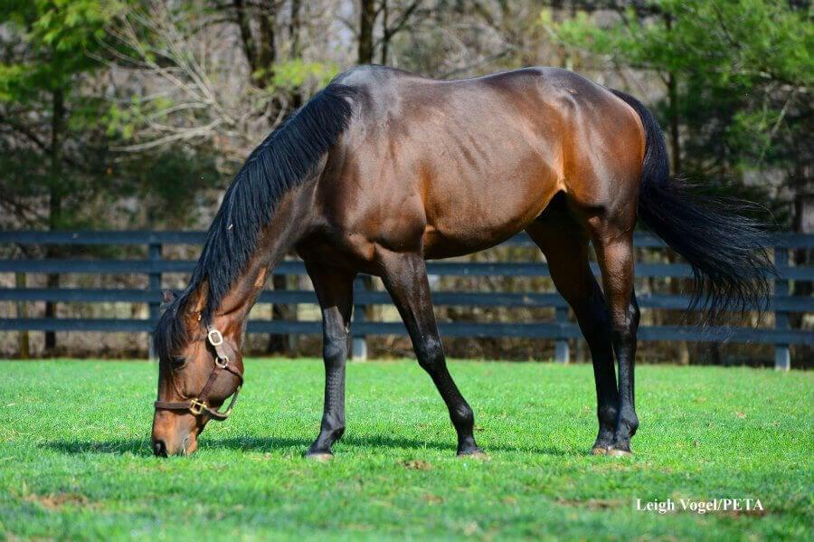 2012 – Horse Retirement Plan