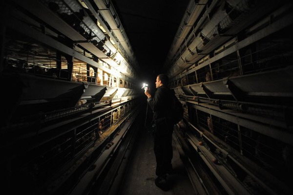 Egg Farm Investigation
