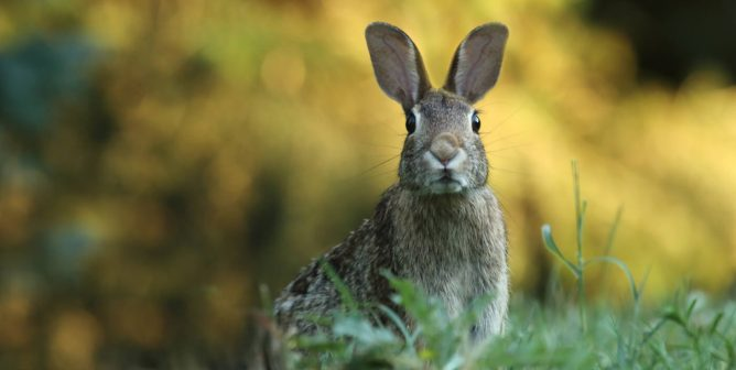13 Important Rabbit Facts You May Not Know | PETA