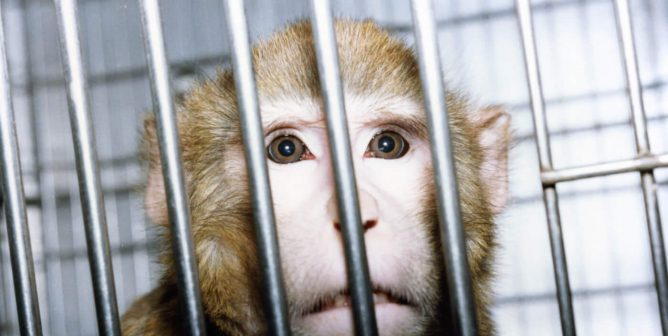 What Are the Disadvantages of Animal Testing? PETA Blows the Lid off Laboratory Cruelty