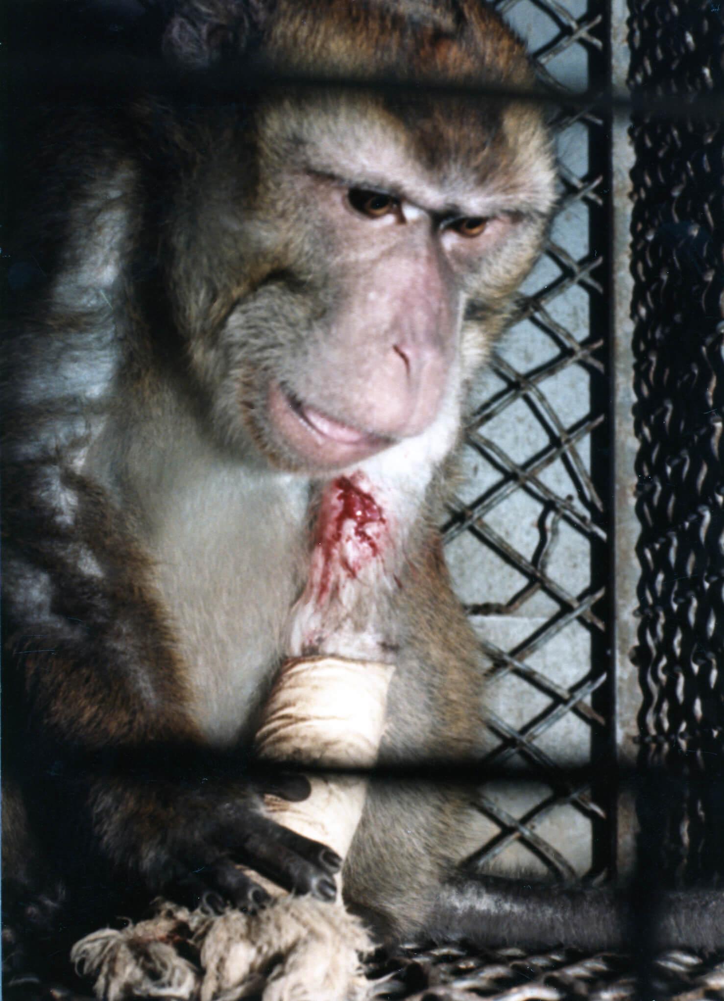 Silver Spring Monkey Case