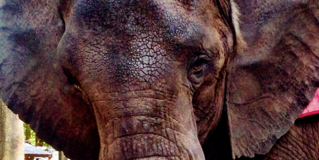 Take Action to Help America's Loneliest Elephants