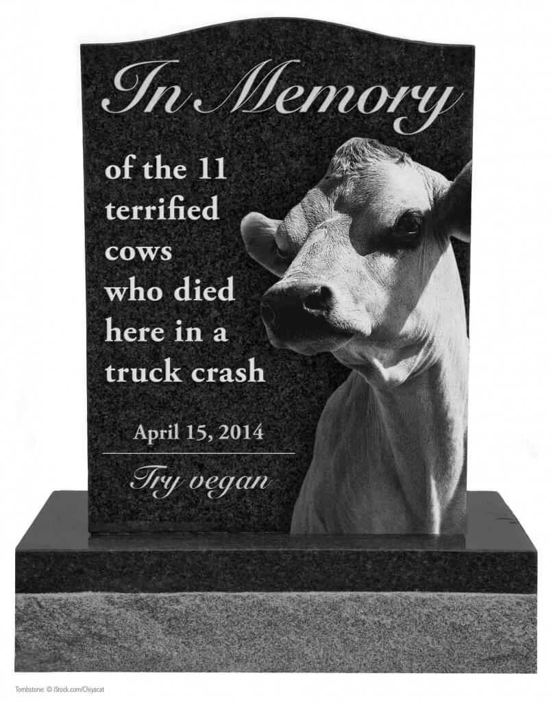 Cow Tombstone