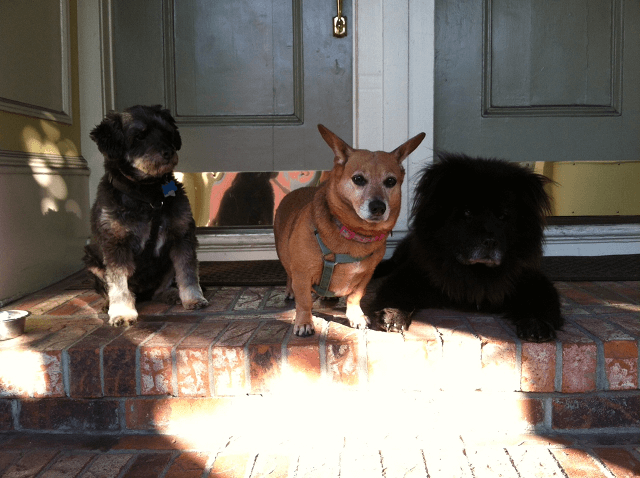 Annie and co
