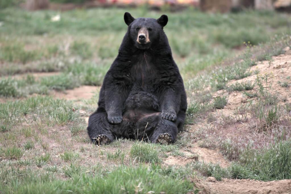 Boudreaux the Bear (3)
