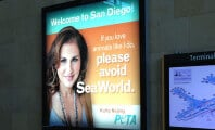 A Win for Orcas! Kathy Najimy's New Ad Goes Up in San Diego