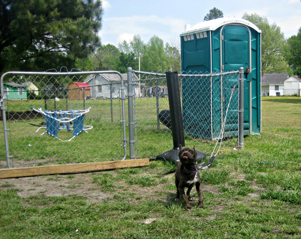 Macey the Dog Chained