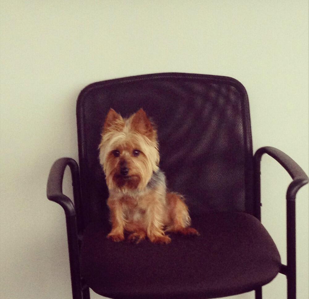 Meya waiting for a meeting1