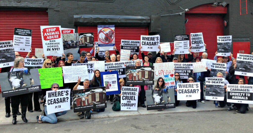PETA and NYCLASS protesting Horse-Drawn Carriages in New York