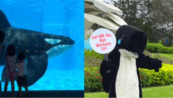 5 Things You Can Do to Help Shut Down SeaWorld