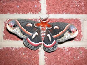 Moth on Brick Wall