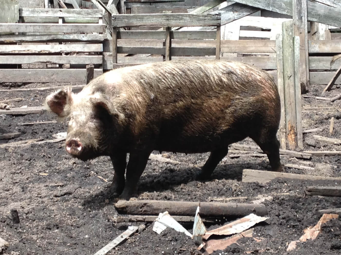 Report Cruelty to Animals | PETA