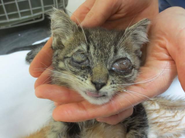 Very sick kitten (GRAPHIC)