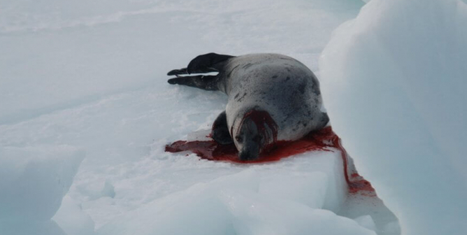 This Commercial Seal Slaughter Video Has Gone Viral—and Kind Stars Are Sharing It