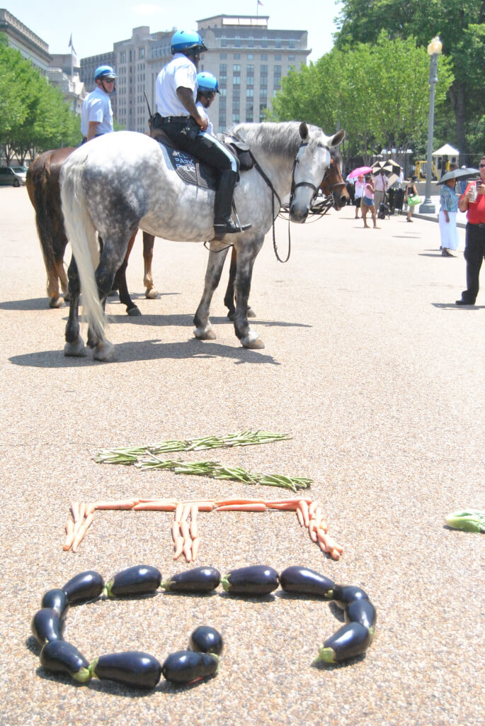Horse Checks Out White House Eat Your Veggies Day Demo